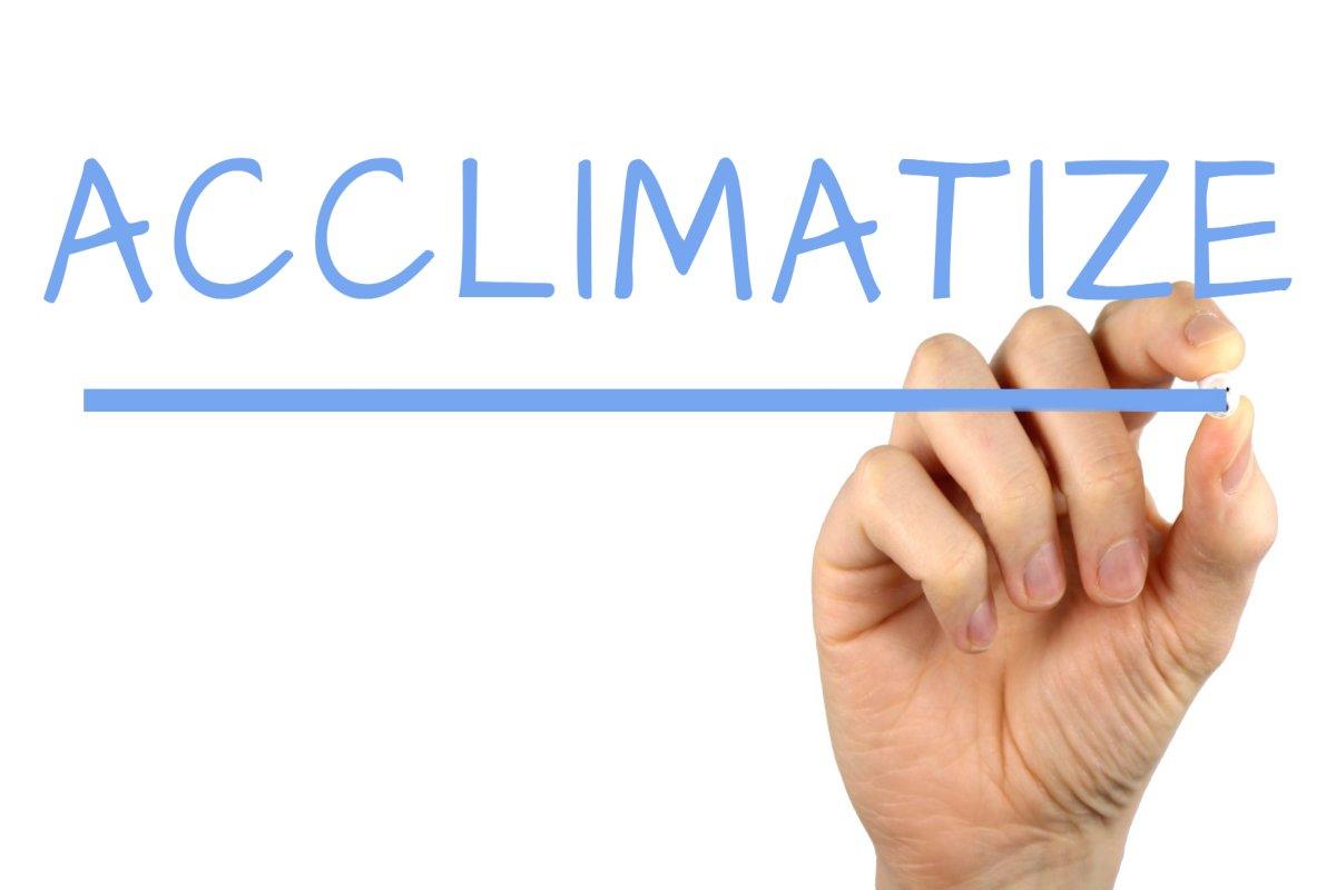 acclimatize